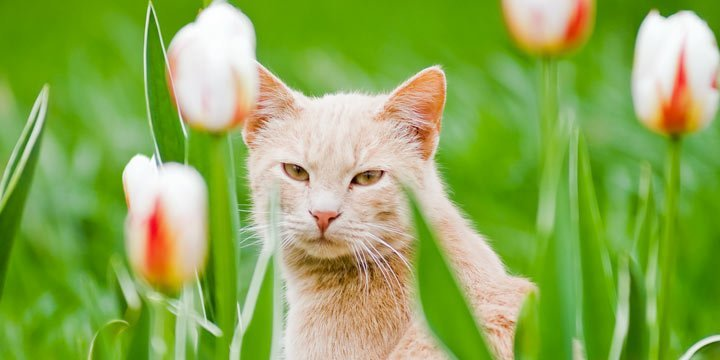 Diese Pflanzen sind höchst giftig für Katzen – eine Übersicht