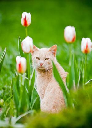 Diese Pflanzen sind höchst giftig für Katzen