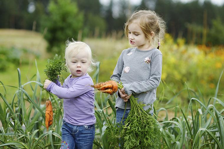Kinder lernen Gemüse kennen