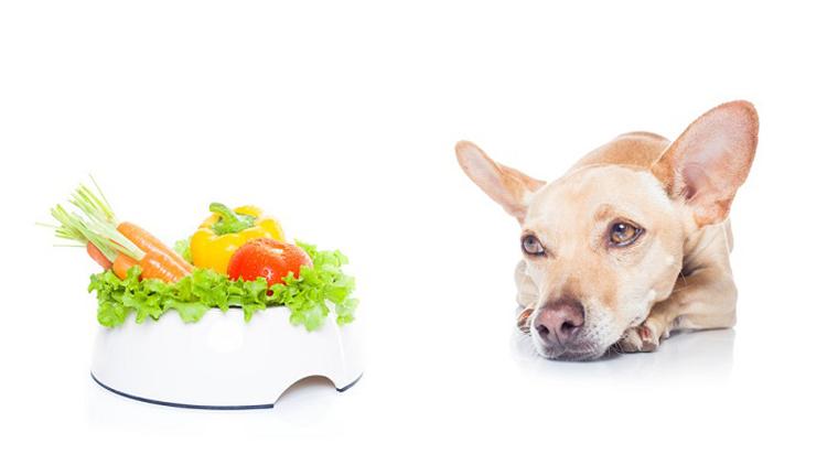 Nicht jeder Hund ist von Gemüse begeistert, für einige ist es jedoch eine spannende wie auch schmackhafte Alternative.