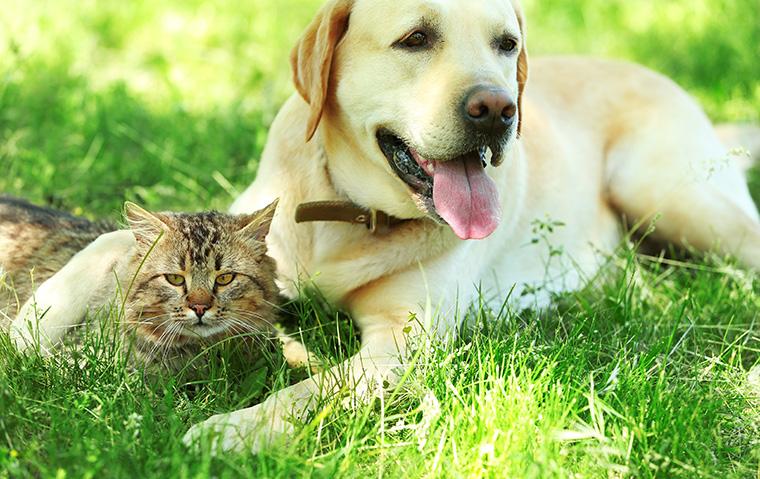 Gesundes Futter sorgt für vitale Haustiere