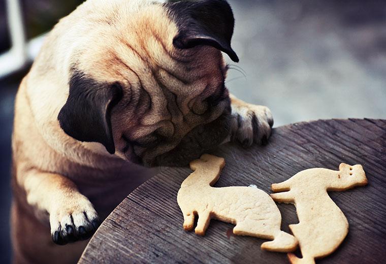 Leckere, selbstgemachte Hundekekse für die lieben Vierbeiner.