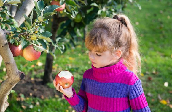Ist Bio die Lösung zur Kinderernährung?
