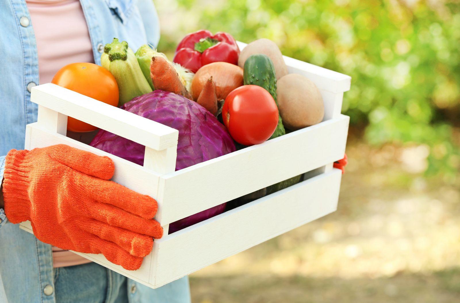 Gemüsekiste einbauen