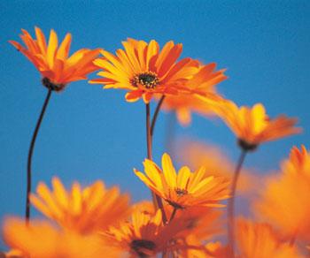 Blumen sprechen nicht nur die Sprache der Liebe. ©Digital Vision