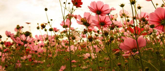 Mit den Blumen kommt nicht nur Heiterkeit daher. Oft wird Blut vergossen, bevor die Schönheit der Blume in unseren Vasen scheint ©iStockphoto