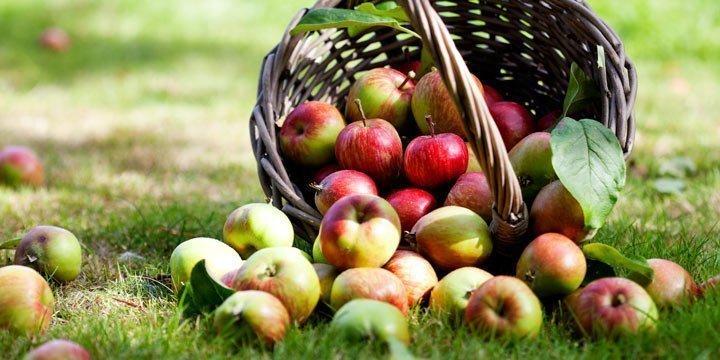 Äpfel haben immer Saison – das Beste rund um den Apfel