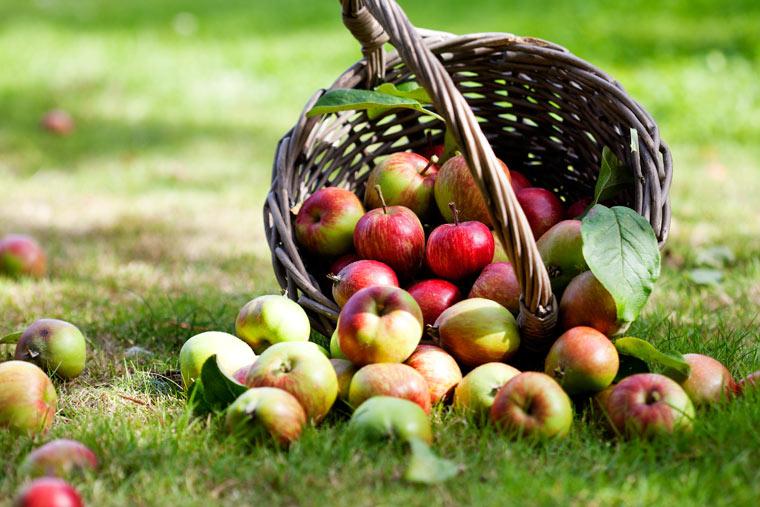 Äpfel haben immer Saison