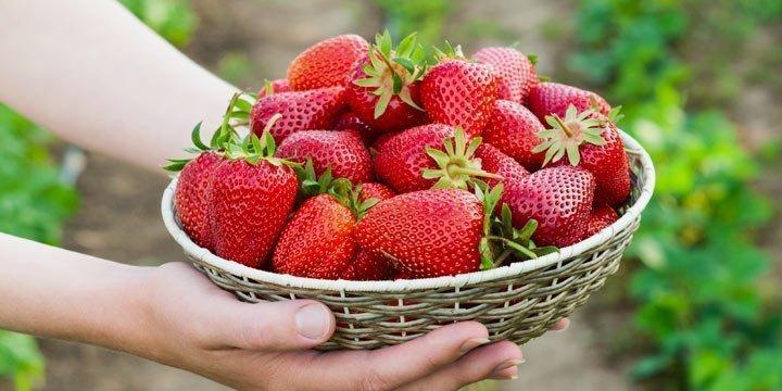 Die Erdbeerzeit ist da!