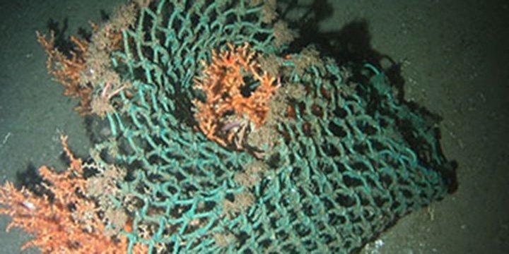 Studie zeigt: Plastikmüll im Meer auch in Europa ein großes Problem für Umwelt, Tiere & Menschen