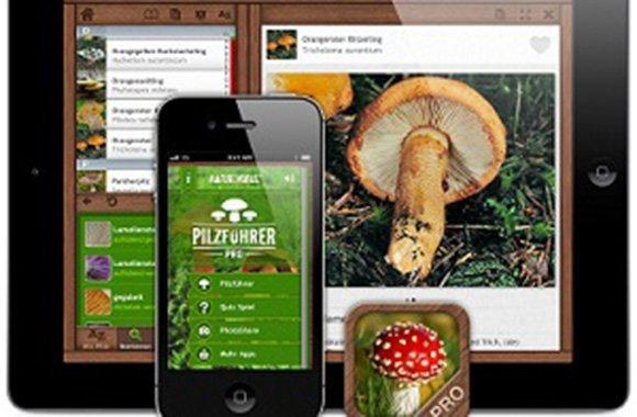 Mit der Pilzführer-App Pilze sammeln