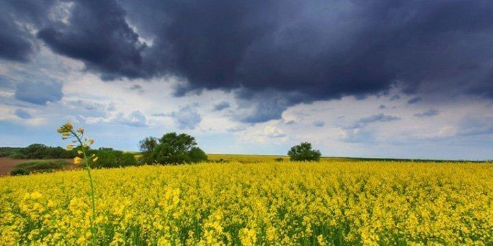 Mehr Extremwetterlagen durch Klimawandel: Große Auswirkungen auf die Forst- und Landwirtschaft