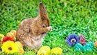 Alles rund um Ostern: Rezepte, Basteln, Bräuche & mehr