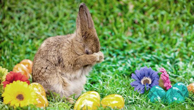 Putzig putzt sich. Das süßeste Osterhäschen hat uns tolle Tipps mitgebracht © edenwithin (iStock/thinkstockphotos.de)