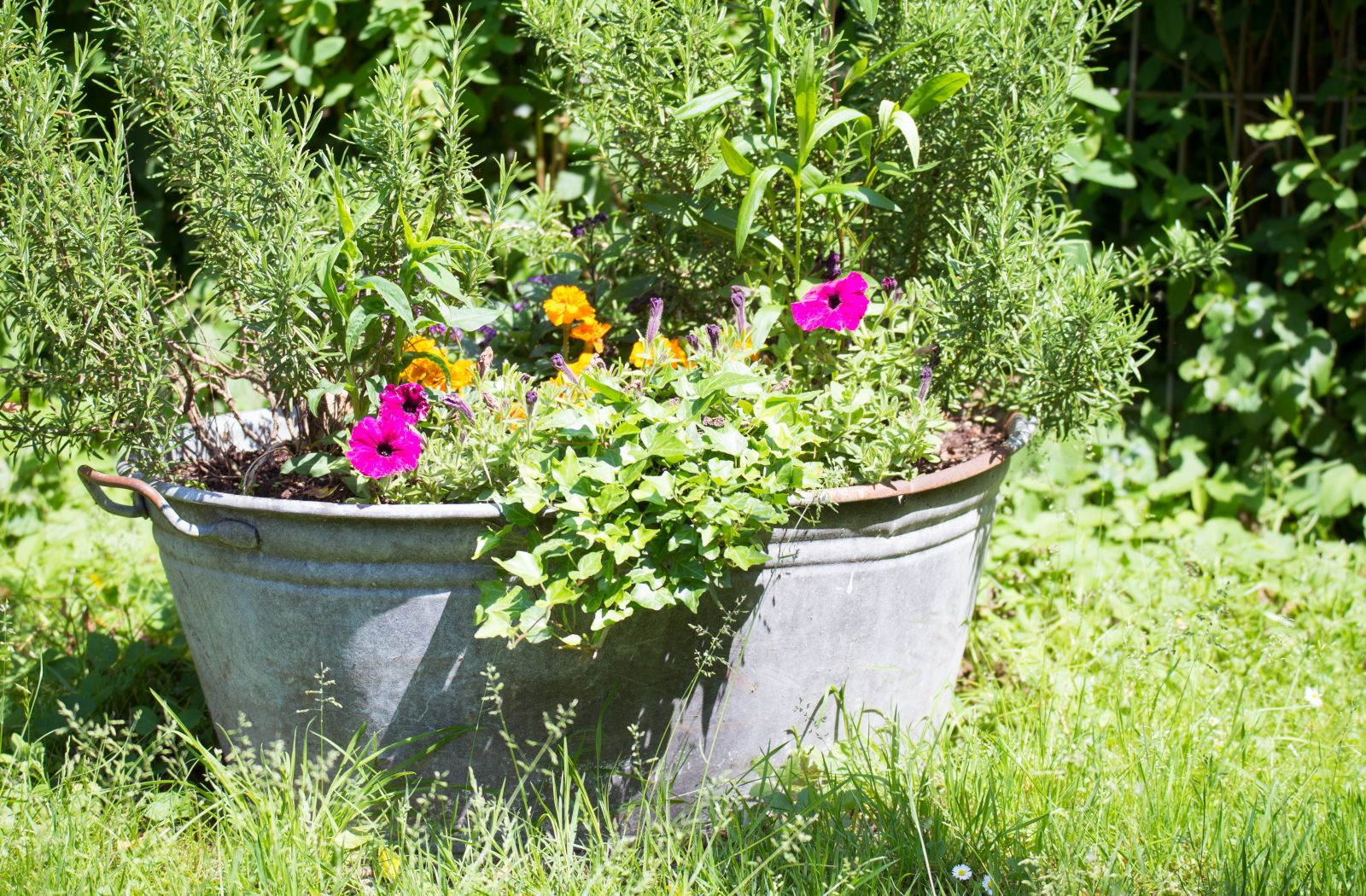 Zink im Garten