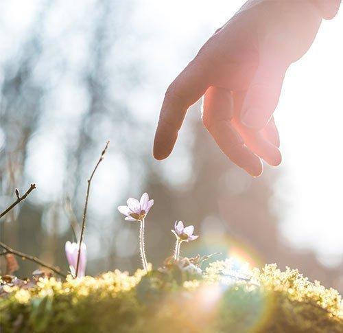 Auf Blume zeigende Hand
