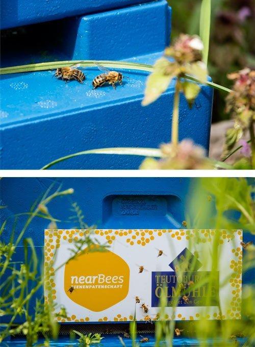 Die Teutoburger-Öhlmühle setzt sich aktiv für den regionalen Bienenschutz ein.