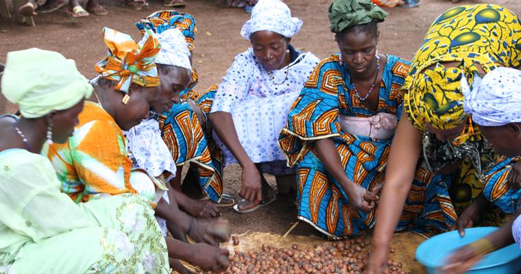 In Siokoro, dem kleinen Dorf in Mali, in dem unsere Karitébutter produziert wird, leben rund 170 kinderreiche Familien. Im Juli 2011 wurde hier eine Sheabutter-Produktionsanlage fertiggestellt, die inzwischen bereits für etwa 50 Familien eine sichere Einkommensquelle ist.
