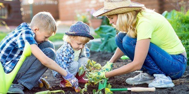 Wann und wie sollte ich Erdbeeren pflanzen? Die besten Tipps