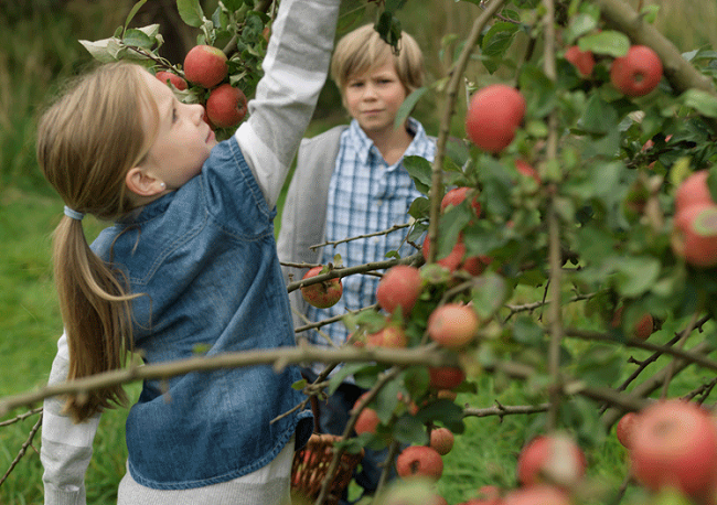 Apfelpflücken BKK Advita