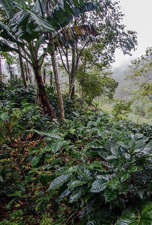 Naturland Agroforst