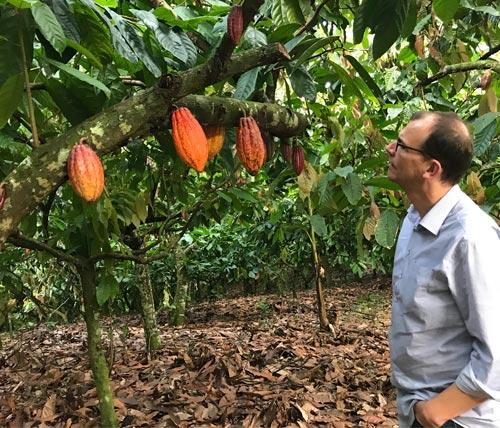 Qualitätssicherung Kakao