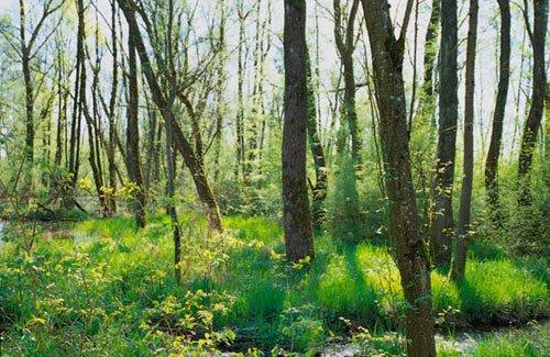 Das Salus Auwald Biotop