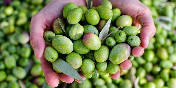 Bio Olivenöl Test: Daran erkennst Du gutes Olivenöl