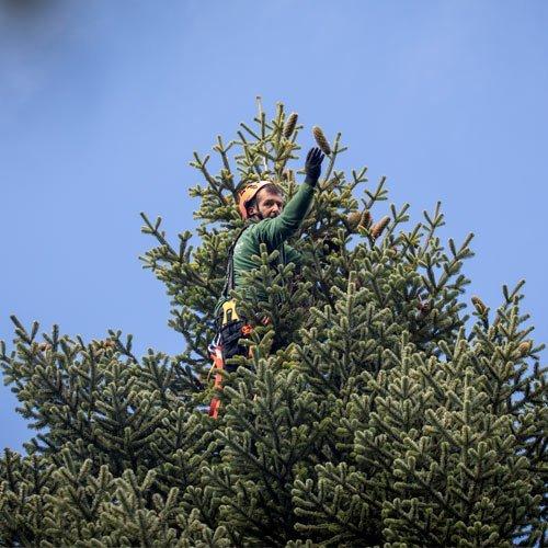 Faire Weihnachtsbäume