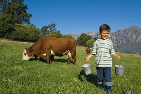Die weidende Kuh spart Wasser: Das Gras, das sie frisst, muss nicht zusätzlich bewässert werden
